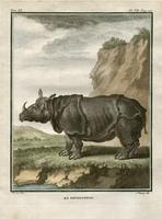 rhinoceros, from Buffon's Histoire Naturelle